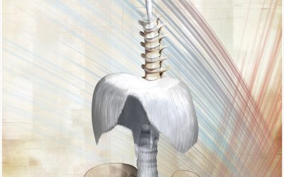 Das Zwerchfell ein lebenswichtiger Muskel